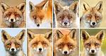 Click image for larger version.  Name:fox mug shot.jpg Views:5 Size:11.3 KB ID:33110